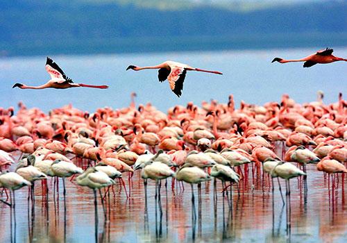 lake-manyara-birds