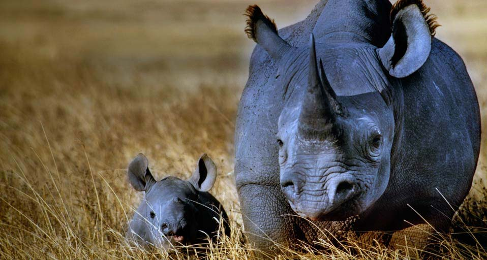 Five endangered species found in Tanzania