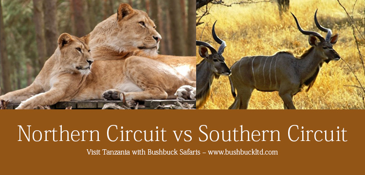 Tanzania Northern Circuit vs. Southern Circuit