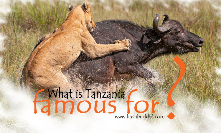 What Is Tanzania Famous For?