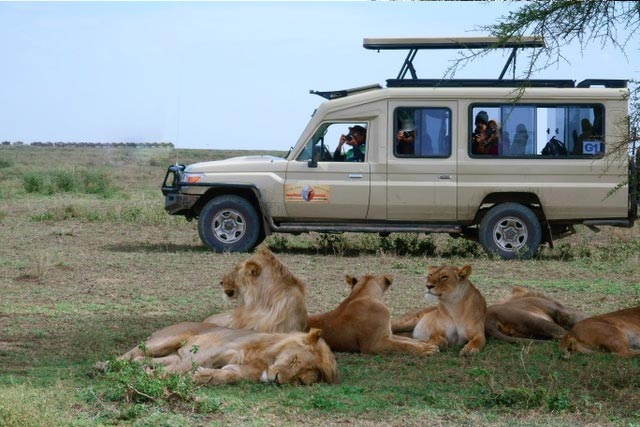 Are safaris in Tanzania better now and how have African safaris evolved in the last 30 years?