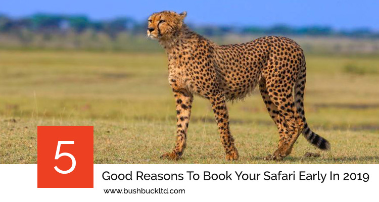 5 Good Reasons To Book Your Safari Early In 2019