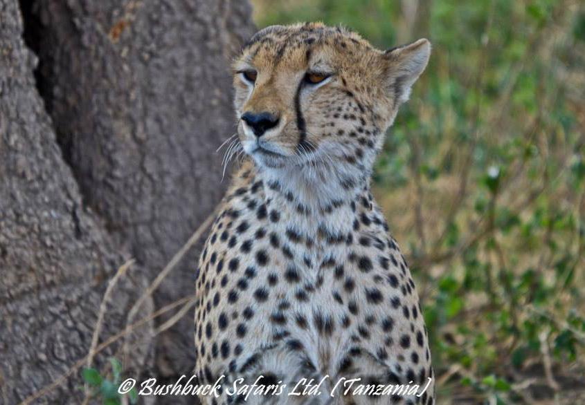 Animals at The Serengeti National Park
