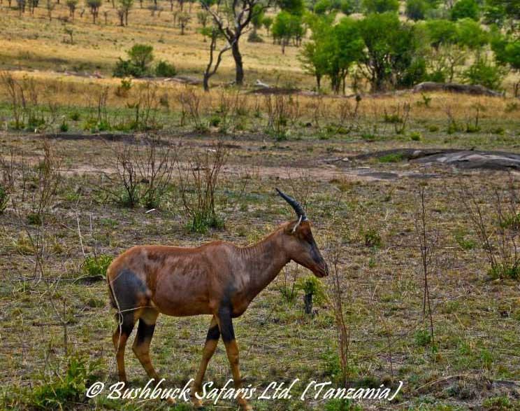 Serengeti Safari Park The Worlds Best National Park - 9 things to see and do in serengeti national park