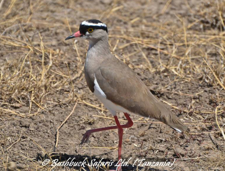 Reptiles, Insects & Birds At The Serengeti National Park