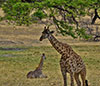 Animals at Tarangire
