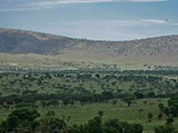 Tanzania Plains & Plateaus