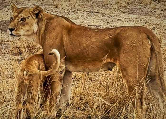 A short family safari