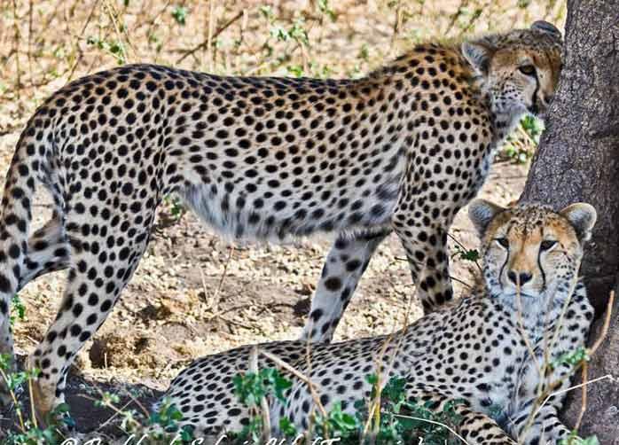 One Night Tarangire, Two Nights The Serengeti and One Night Ngorongoro Crater or Karatu