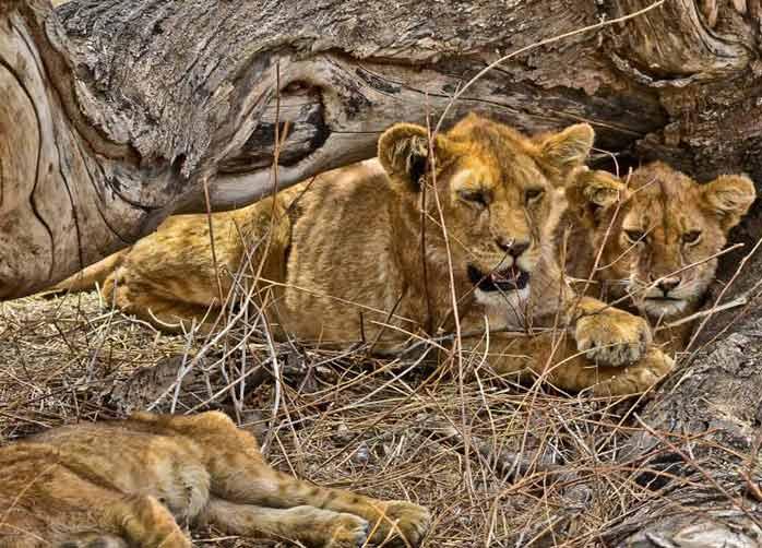 Two Nights Ngorongoro Crater or Karatu and  Two Nights The Serengeti