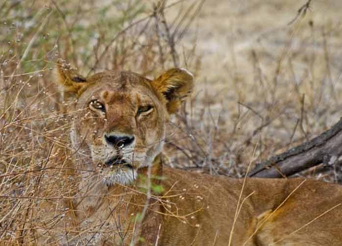 One Night Manyara, Two Nights The Serengeti and Two Nights Ngorongoro Crater or Karatu