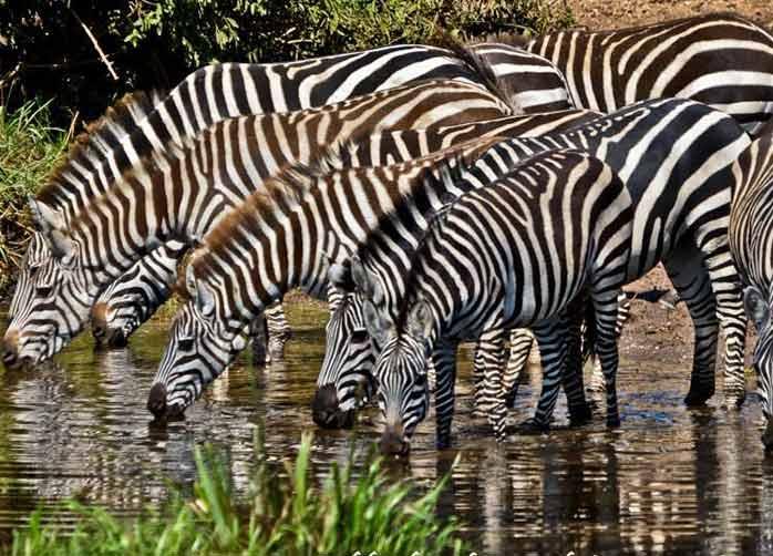 One Night Tarangire, Two Nights The Serengeti and Two Nights Ngorongoro Crater or Karatu