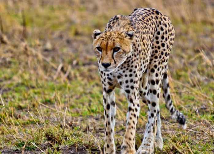 One Night Manyara, Three Nights The Serengeti and Two Nights Ngorongoro Crater or Karatu