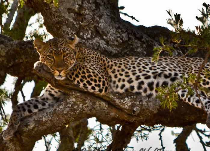 One Night Tarangire, Two Nights The Serengeti, Two Nights Ngorongoro Crater or Karatu and One Night Manyara