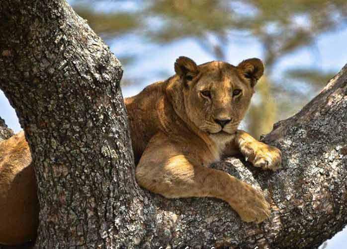 Two Nights Tarangire, Three Nights The Serengeti, Two Nights Ngorongoro Crater or Karatu and One Night Manyara
