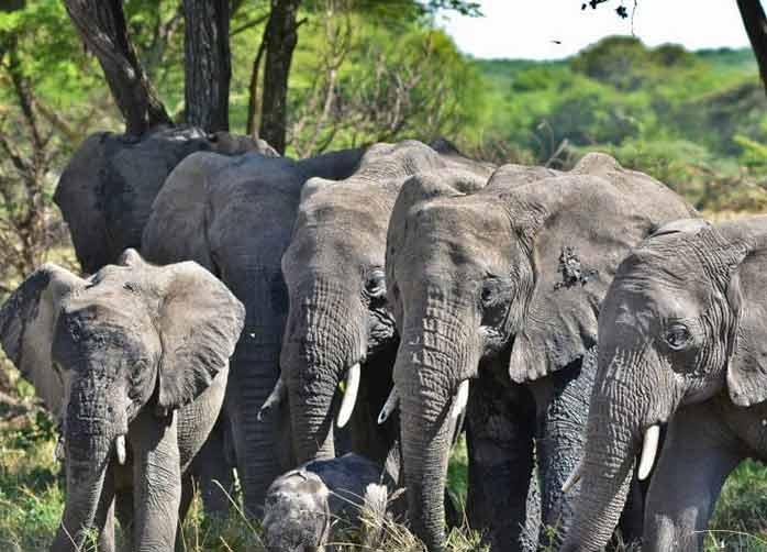 One Night Tarangire and  One Night Ngorongoro Crater