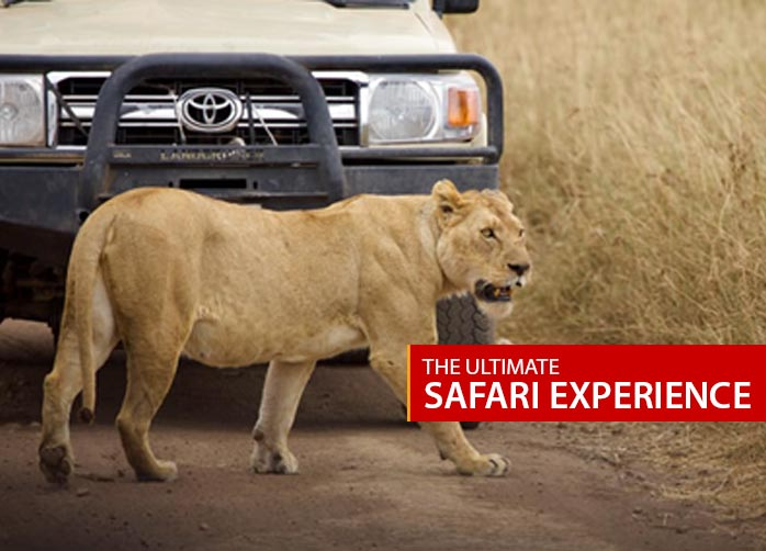 The Ultimate Safari Experience