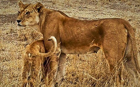 Tanzania Short Family Safari