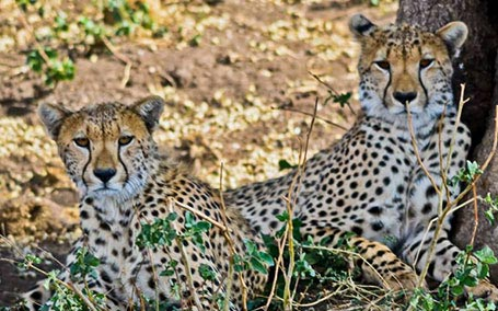 Tanzania Extended Family Safari