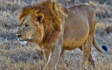 Southern Tanzania Safaris