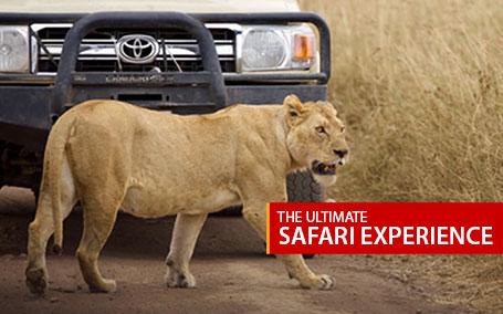 The Ultimate Safari Experience