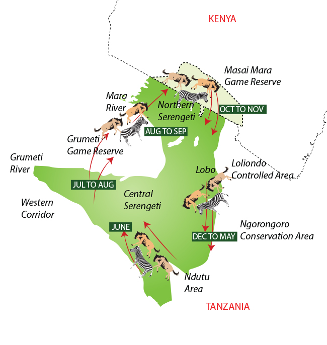 Serengeti Migration Map | Wildebeest Migration on kilimanjaro map, tarangire national park, lake tanganyika map, serengeti national park, cape of good hope map, ngorongoro crater map, kalahari map, himalayas map, sahel map, zambezi river map, congo river map, niger river map, sinai peninsula map, great victorian desert map, mount kilimanjaro, africa map, ngorongoro conservation area, mara river, horn of africa, lake nyasa map, lake victoria map, great rift valley map, victoria falls map, tanzania map, nile map, atlas mountains map,