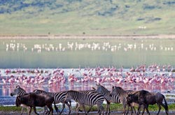 Animals At The Ngorongoro Crater