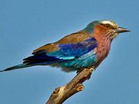 Birds at Tarangire