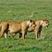 Above & Beyond Safari