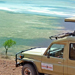 Adventurous Peace Safari