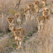 Alpha Paradise Safari