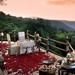 Beautiful Petal Safari
