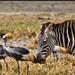 Discover Safari