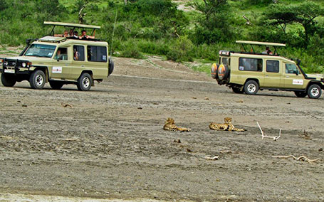Group / Corporate Safaris