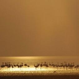 Night Game Drive at Lake Manyara