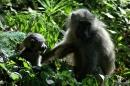Monkeys (Kheraj Family)