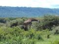 Ngorongoro (John Madinda)